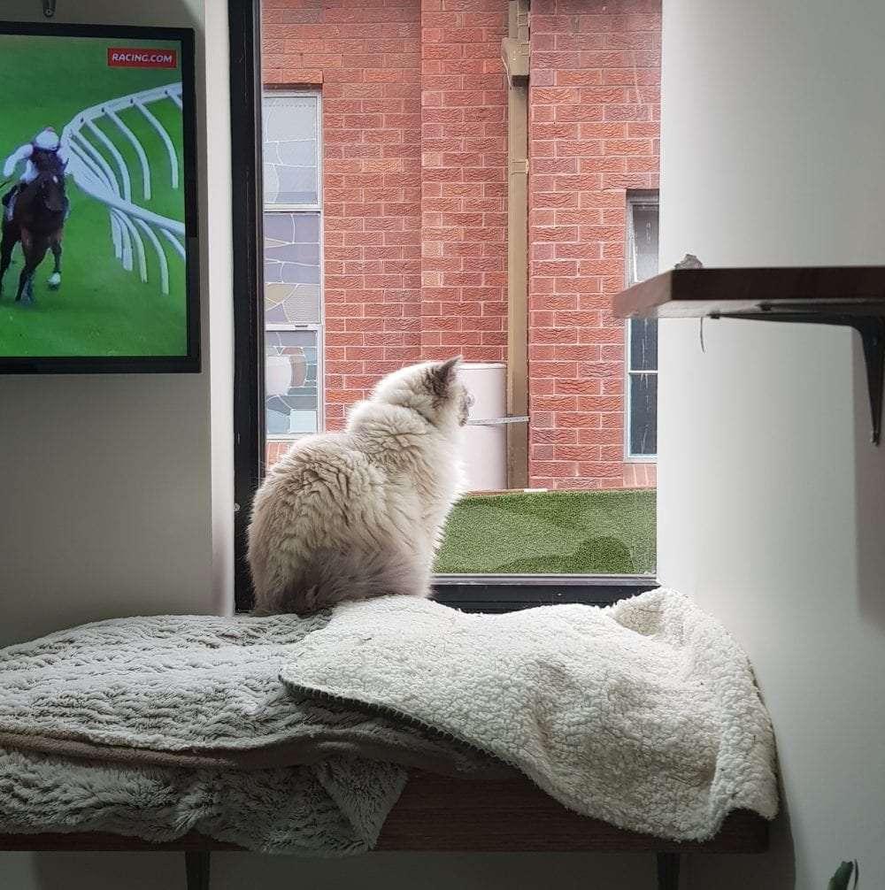 Cat Hotel   Luxury & Cat Friendly Hotels   Blakehurst Vet