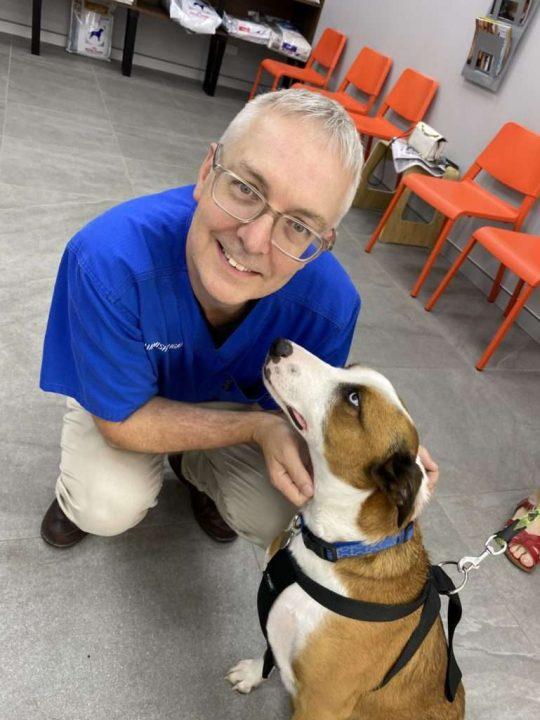 Blakehurst Vet - Pet Care - image