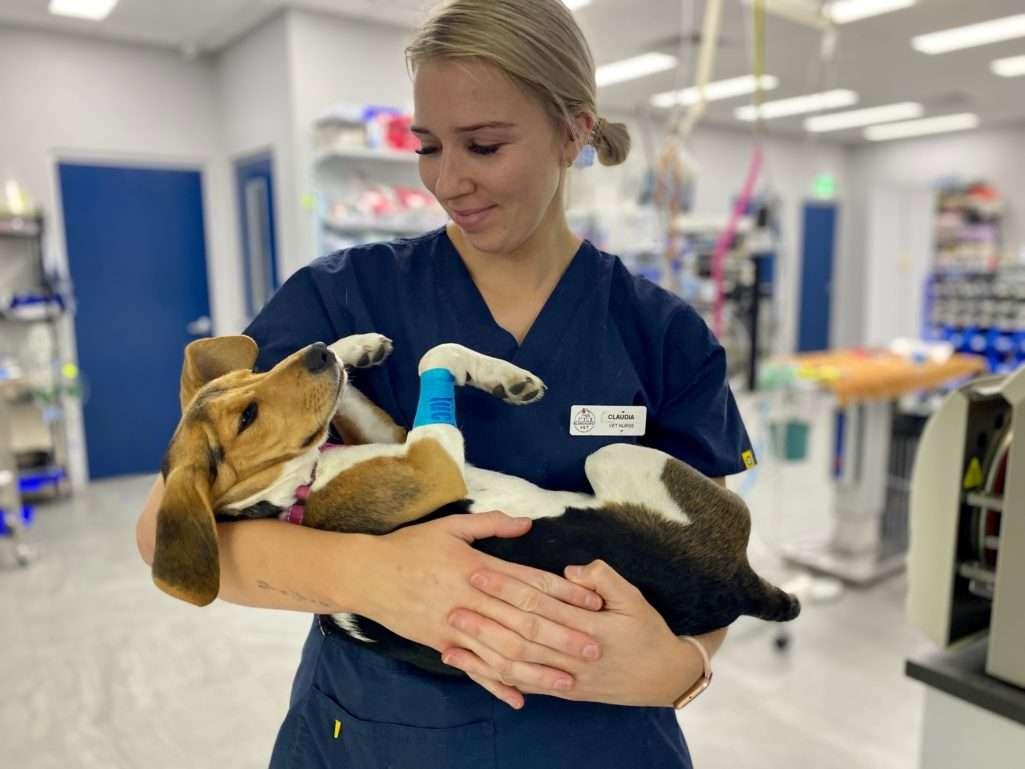 Blakehurst Vet - Pet Care